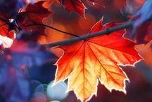 { Automnal } / L'Automne sous toutes ses coutures : l'orange, la pluie, les feuilles, le rouge, le froid...