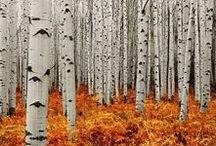 a u t u m n / Landschaften, Mode und Leben im Herbst