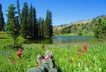 Hikes to Backcountry Lakes in Yellowstone National Park / Does your perfect hike involve resting by the shores of a backcountry lake? Check out these lake hikes in Yellowstone National Park.