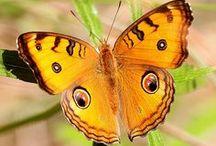 Mariposas Butterflys / by Jose D