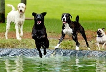 Unleashed Gainesville / Take your dog for off-leash play at one of these beautiful dog parks in Gainesville!