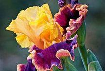 Flower çiçek