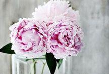 Flowers / Flowers I love