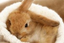 Bunny / #rabbit #bunny #cute #love #cuteness