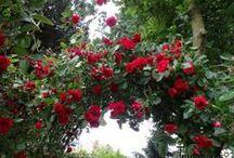 Rose Gardens / Roses, roses, roses…