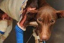 Κοινωνία πολιτών / Κάνουμε οτι μπορούμε για την προστασία των αδέσποτων ζώων και όχι μόνο. Ακόμα ζητώ την βοήθεια σας για να βρούμε ένα σπίτι για κάθε αδέσποτο σκυλάκι η γατάκι. Σας Ευχαριστω. Το Τηλέφωνο μου +306950559212. Δημήτρης - Αναστασία..