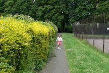 Ashburton Park, London