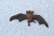 Tutos : Chats & Animaux de sorcières / Tutoriels Chauves-souris - Crapauds - Araignées et petits Monstres  pour Miniatures au 1/12ème - Maisons de poupées