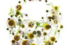 kolorowo / kwiaty i przedmioty do ozdoby