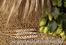 I birrifici e le birre artigianali delle Marche