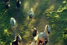 Lamail talli & kahvio / Planing my own stable. ;)