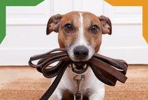 #PetsTips / Consejos que te podrán ayudar al día día con tu mascota.