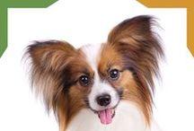 ¿Sabías que? / Datos curiosos sobre mascotas