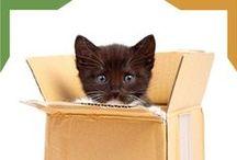 Gatitos / Descubre más información sobre el comportamiento de los gatos