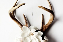 Antlers and Hides