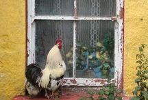 Chickens / by MacKenzie-Childs