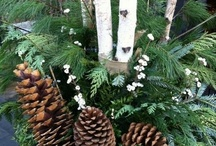 Winter Garden and Plantings
