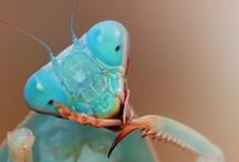 Insects / by Michelle Schmidt