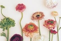 Flor que te quero flor