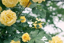 Simply Yellow / Yellow always makes us feel bright and happy and positive - a real sunshiney colour