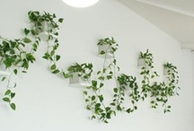 Eco Friendly Home Decor Ideas / All nature inspired home decor.  It either looks natural, or is made of natural materials.
