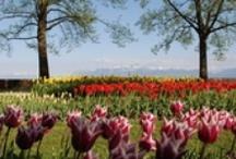 Tulips Festival - Fête de la Tulipe