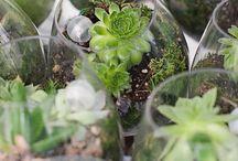 Somistus - Garden decor