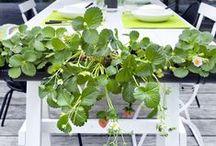 Hyötypuutarha - Kitchen Garden