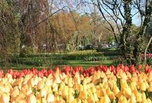 Fête de la Tulipe 2013