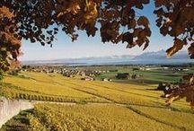 Vineyards of Morges and Region, Switzerland