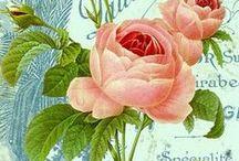 Botanique vintage etc...