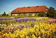 Iris Garden - Vullierens