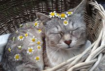 c a t s / I really love cats so I pinned cute and funny cat photos