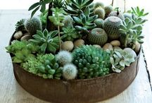Vihersisustus - Interior green decor