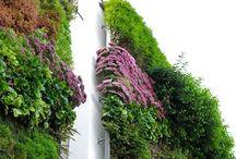 Viherseinät - Vertical garden