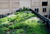 Viherkatot - Green roofs