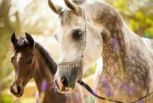 Horse / Beutiful