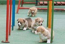 Pupys