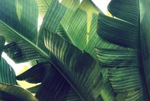 Botanical Tropical - Join the New Tribe