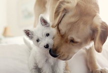 Puppies / When I run across someone that does not like dogs (oh the horror, but yes those people are out there), I feel sorry for them.  They don't know what they are missing.  I believe dogs are one of God's greatest gifts to mankind!