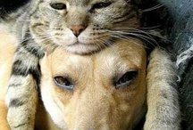 Animal Lovers / Pins of those precious pet's we all count on to turn our day around.  Sometimes we even count on them to help us when we're not feeling well and our health is not quite right.