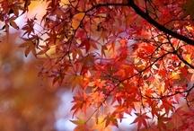 Autumn Love ☔