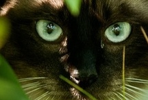 Cats cats cats / by Linda Cox