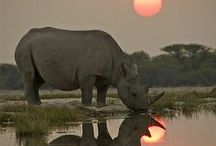 Southern African Fauna and Flora / Animals