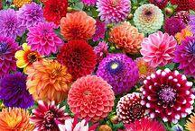 Garden Love / Garden, gardening, gardening tips, garden design, landscaping, growing vegetables, perennials, annuals, vegetables, garden ideas, landscape ideas, landscape design, plants
