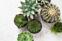 Succulent et fleurs