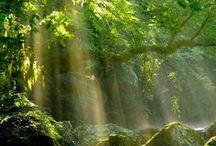 Nature / Nature, nature photography