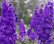 Garden.love Blog