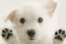 Dogs / Cute dogs go here.
