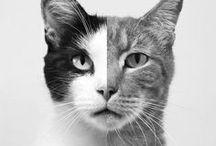 ~cat~